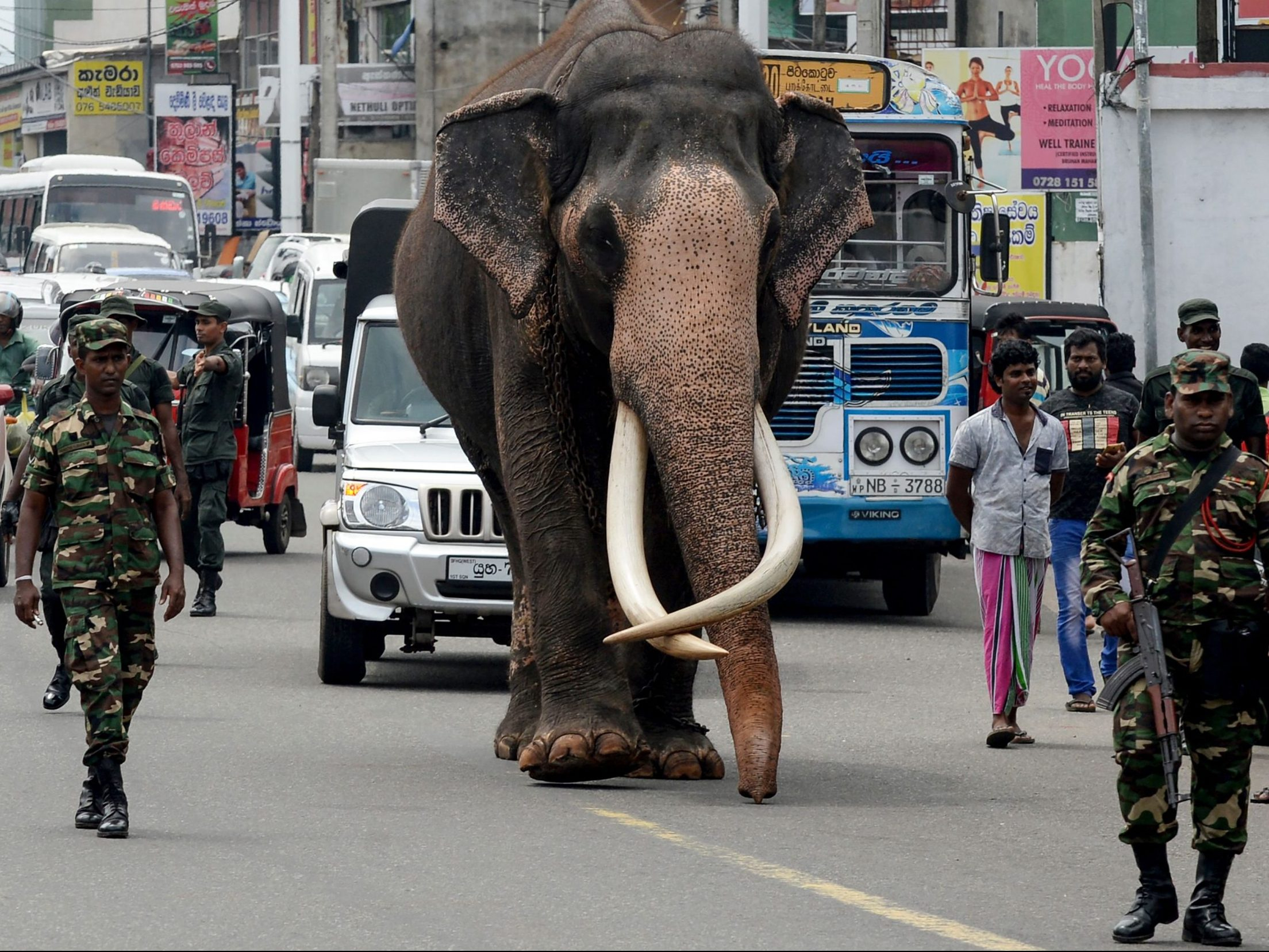 ODDS AND ENDS: Drunk driving elephants and other offbeat offerings