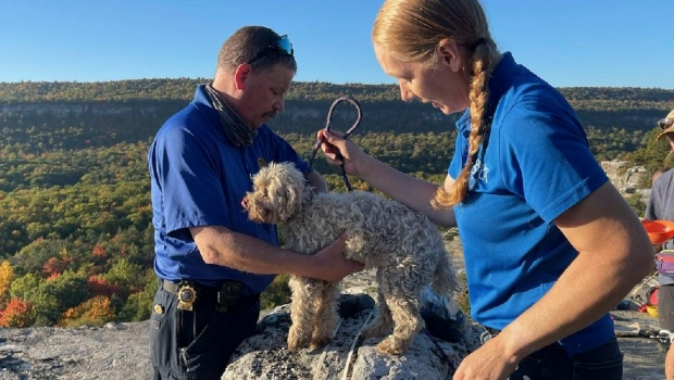 Dog rescued after being trapped in crevice for 5 days