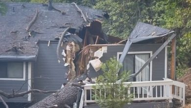 Man survives after giant tree crashes through roof