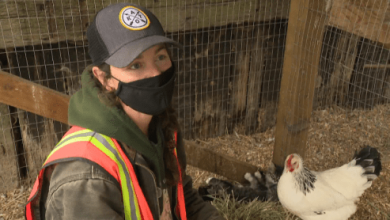 Langley farm hit by heartless thefts